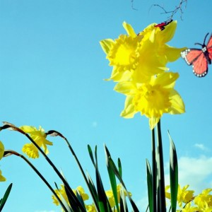 easter 2014 timetables